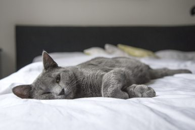 adorable-animal-bed-236606.jpg