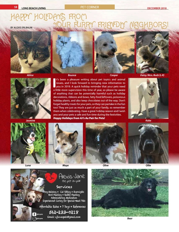 PetCornerDec2018 (1)-001